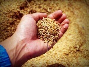 Food Ingredients Cereals συστατικά τροφίμων